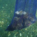 夏の思い出(いまさら編 その2)恐るべし岩牡蠣